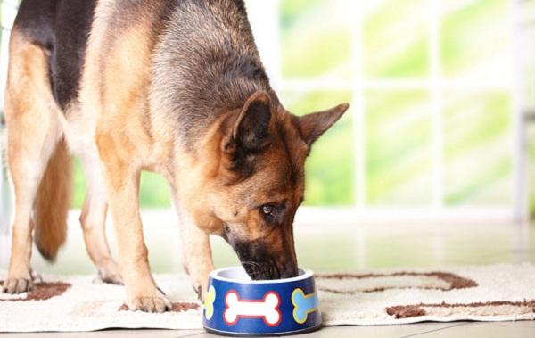 Corretta alimentazione per il tuo cane