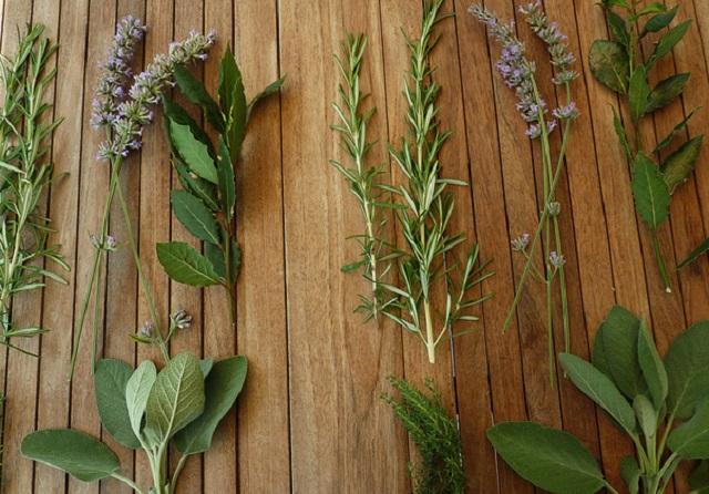 Le Piante Aromatiche : Le piante aromatiche e il loro utilizzo mangostano